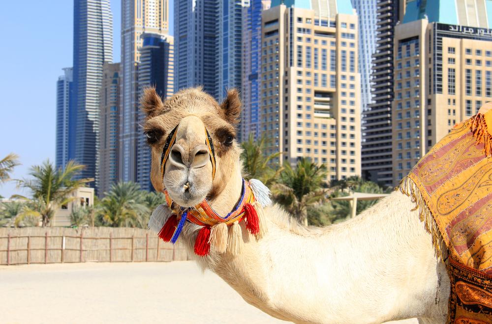 vacanze low cost Dubai