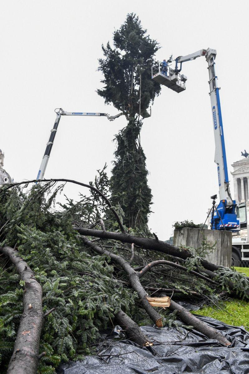 Spelacchio diventa #Spezzacchio: ironia sul nuovo albero di Natale a Roma