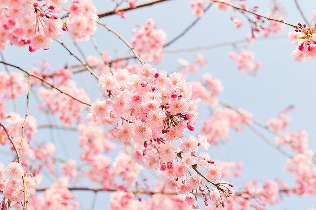 Quali fiori sbocciano in primavera