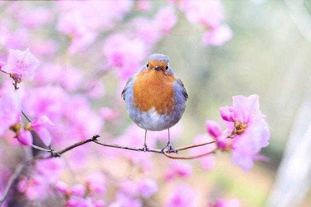 5 poesie sulla primavera