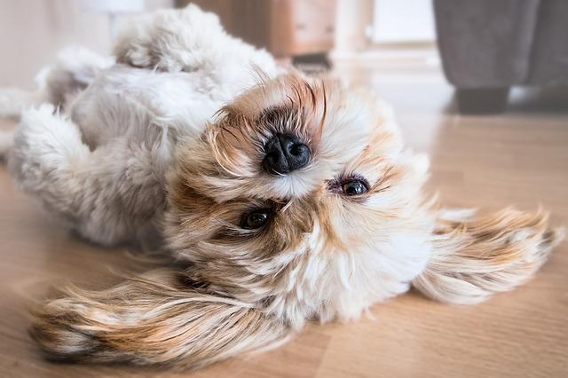 Frasi significative sui cani da leggere nell'International dog day