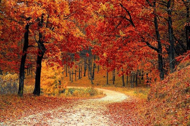 Le più belle frasi sull'autunno per accogliere la nuova stagione
