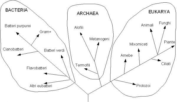 Classificazione dei Procarioti