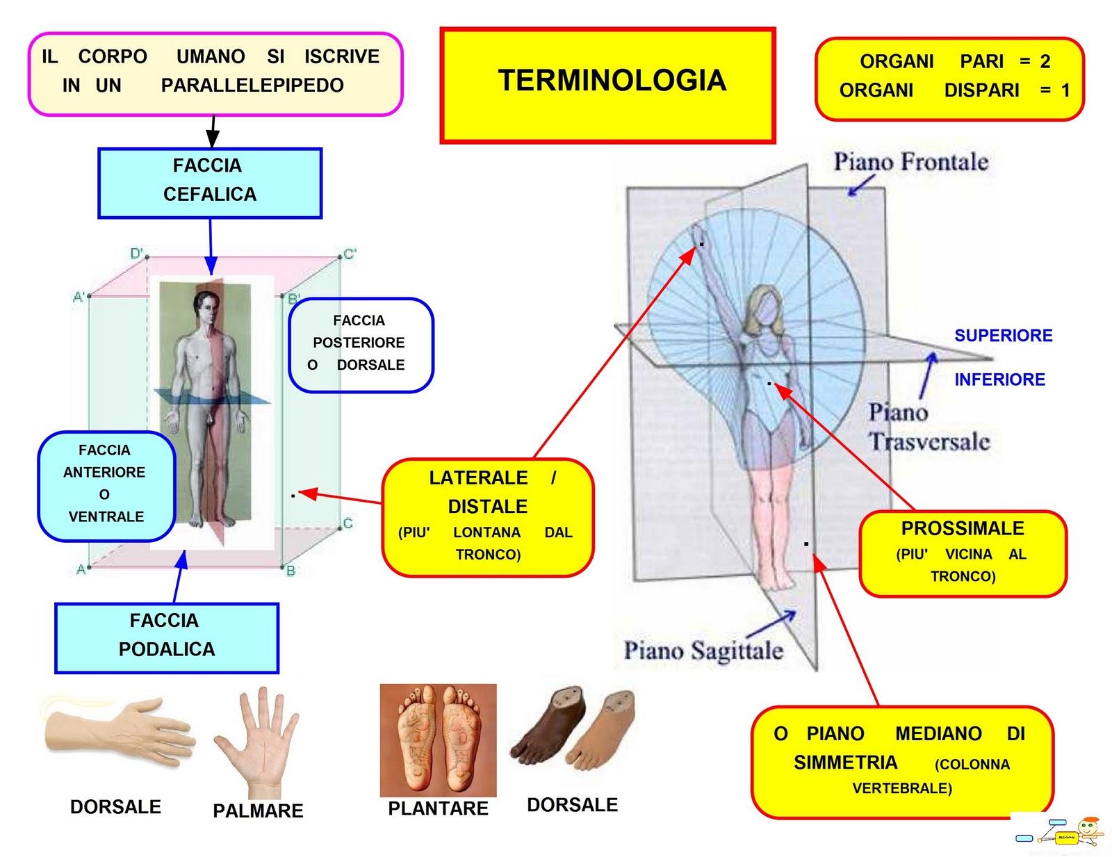 requisiti strutturali steroidi antinfiammatori