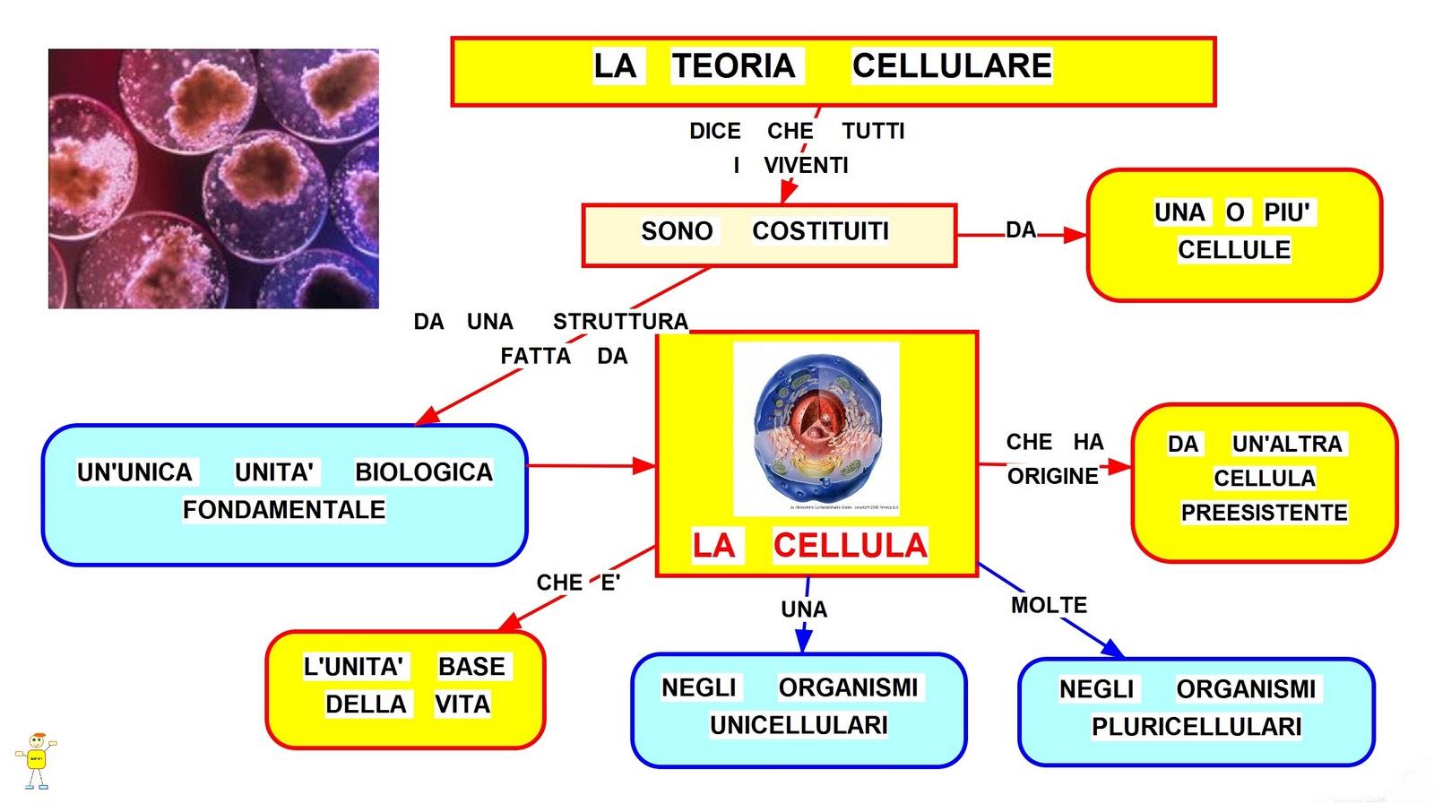 La teoria cellulare mappa concettuale