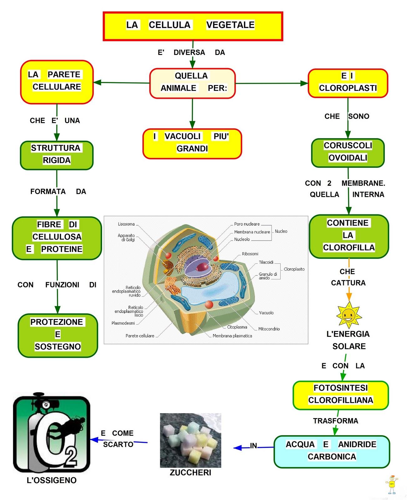 La cellula vegetale mappa concettuale