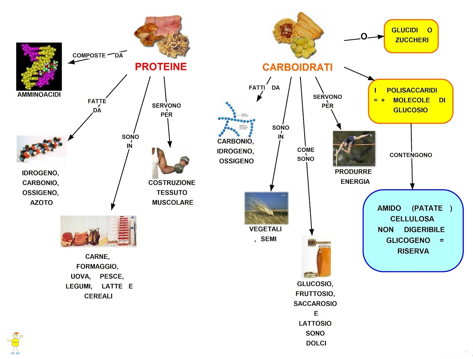 Mappa concettuale proteine e carboidrati
