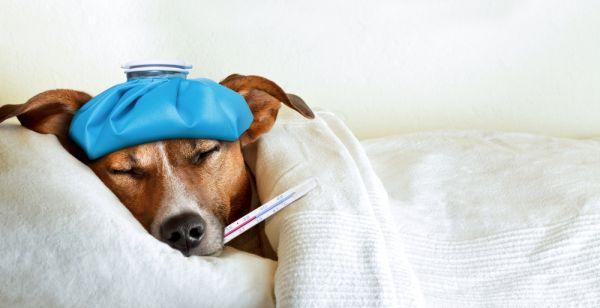 test veterinaria 2018: data, posti disponibili, bandi e scorrimenti